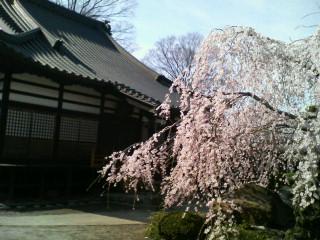福島にも春